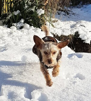 Dog enjoying snow